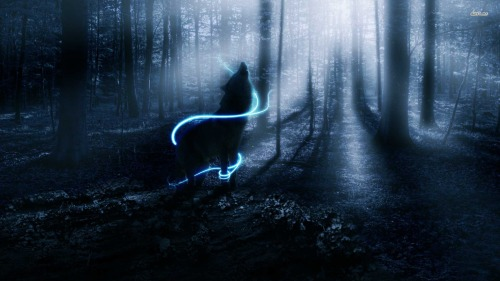 Wolf-wallpaper-wolves-32901744-1920-1080